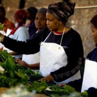 Submit Applications for Africa Agri-food Development Programme
