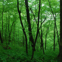 Anne Arundel County and Chesapeake Bay Trust announce Forestry and Forested Land Protection