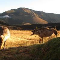 IUCN SSC: Asian Species Action Partnership (ASAP) Species Conservation Grants 2020