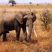 Small Conservation Grants for Projects in Relation to Elephants