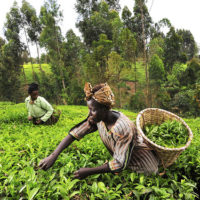 Unique Grants for NGOs working in the areas of Agriculture, Food, and Nutrition