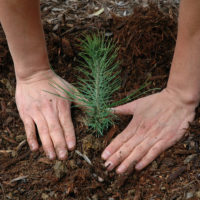 Reforestation Grants Program 2020 - World Wildlife Fund