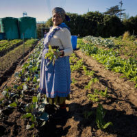 2020 International Agricultural Education Fellowship Program - United States