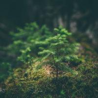 Wildlife Ways Small Habitats Grants Programme (United Kingdom)
