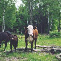 USAID: Feed the Future Bangladesh Livestock and Nutrition Activity