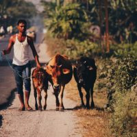 JSIF invites for Rural Economic Initiative (REDI II) Project - Jamaica