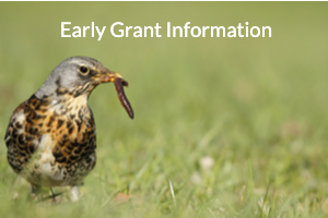 Early Grant Information