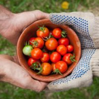 Grants for Drive Food Innovation and Transformation at Scale