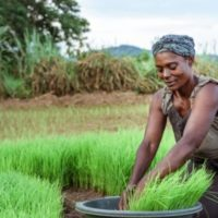 "Call for Projects ""Promotion of Family Farming in West Africa"""
