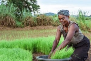 """Call for Projects """"Promotion of Family Farming in West Africa"""""""
