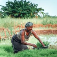 Call for Proposals for Upscaling Agricultural Technologies for Smallholder Farmers in Kenya