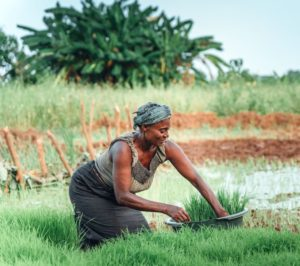 NFP's Youth and Sustainable Agriculture Grant Program