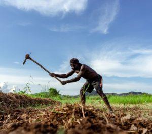 USAID/Nigeria: COVID-19 Food Security Challenge