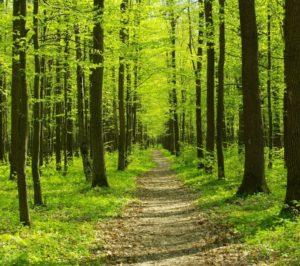 LoCoFoRest (Locally Controlled Forest Restoration) Training Program