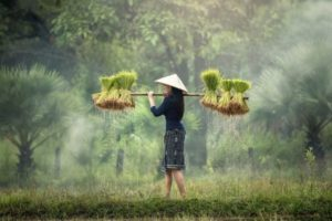 TFF Challenge calls on Innovators and Entrepreneurs to build better Food Systems