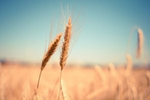 Applications Open for Global Food System Challenge