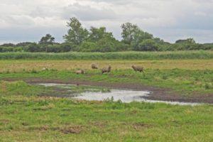 MCF's Maine Land Protection Grant Program - US