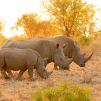 Expedited Conservation Project Grant Cycle – US