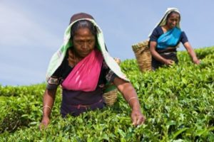 Call for Proposals for Implementing Partners – India