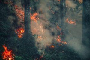 Bushfire Recovery Restoration Grant Program – Australia